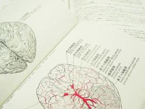 脳が正常に動くかどうかは血の巡りにかかっている