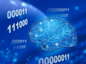 頭を使う前にシトルリンを飲んで!脳をフル活動させて効率アップ!