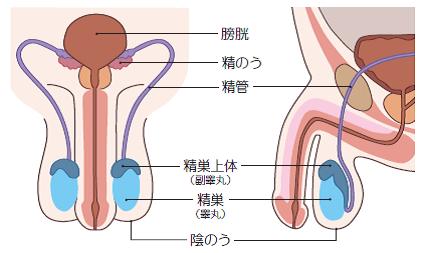 精子を大量につくるにあたっては、股間を温めすぎないことが大切である