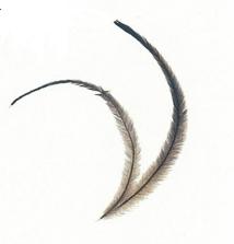 エミューの羽は産業品として利用される