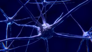 亜鉛は神経や精神を健康に保つ働きがある