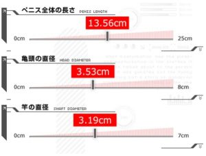 株式会社典雅による日本人のペニスサイズに関する研究結果