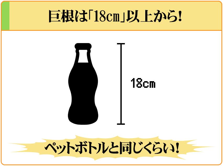 巨根は「18cm超えのペニス」のこと。