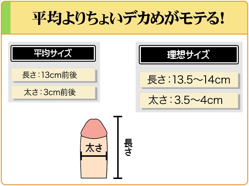 ペニスは平均より少し太くて長いのが女性にモテる